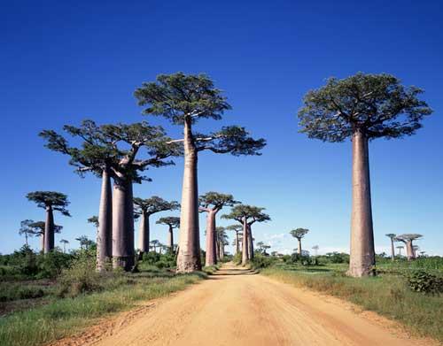 baobabu.jpg